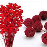 赤色小花・その他