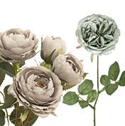 華やか庭咲き系ローズ:ダークカラー系