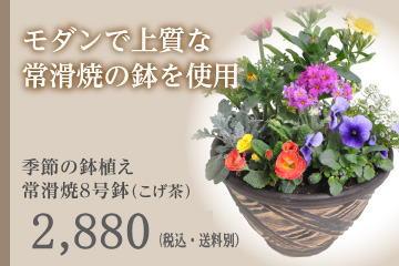季節の鉢植え 常滑焼8号鉢(こげ茶)