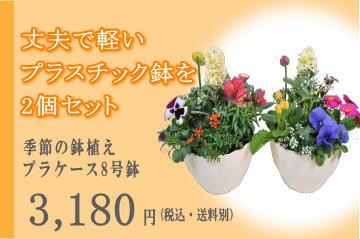 季節の鉢植え プラケース8号鉢2個セット