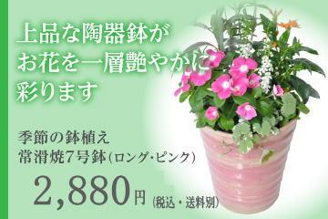 季節の鉢植え 常滑焼7号鉢(ロング・ピンク)