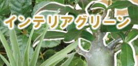 インテリアグリーン・観葉
