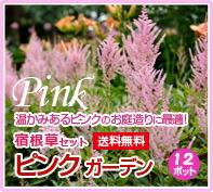 宿根草 ピンクガーデンセット ピンク 寄せ植え 花苗