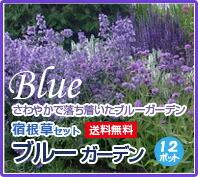 宿根草 ブルーガーデンセット 青色 寄せ植え 花苗