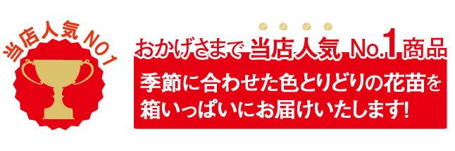 当店人気ナンバー1季節の花苗セット 寄せ植え ギフト等に最適!