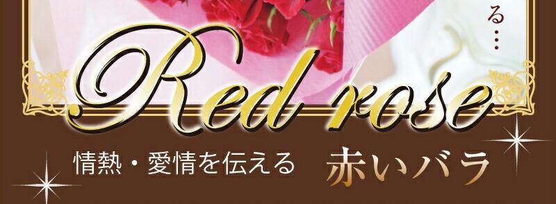 �֤��Х�(�鯡��Ф�)RedRose