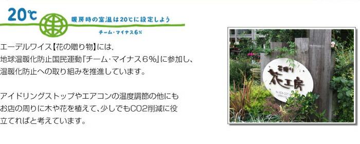 エーデルワイス【花の贈り物】には、地球温暖化防止国民運動「チーム・マイナス6%」に参加し、温暖化防止への取り組みを推進しています。アイドリングストップやエアコンの温度調節の他にもお店の周りに木や花を植えて、少しでもCO2削減に役立てればと考えています。