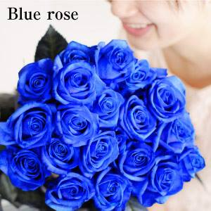青いバラ ブルーローズの花束