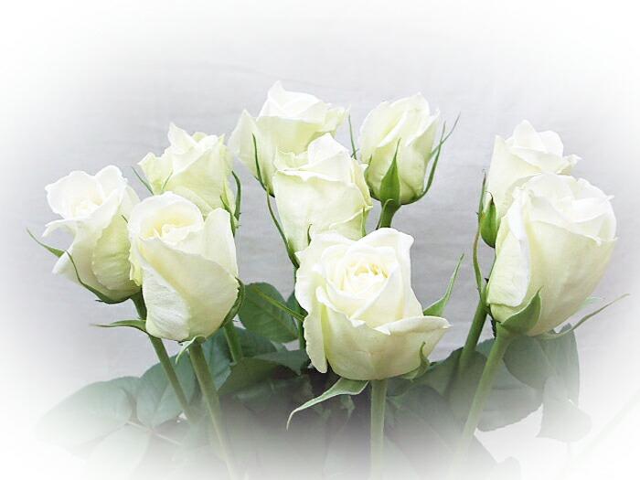 白 バラ 花束