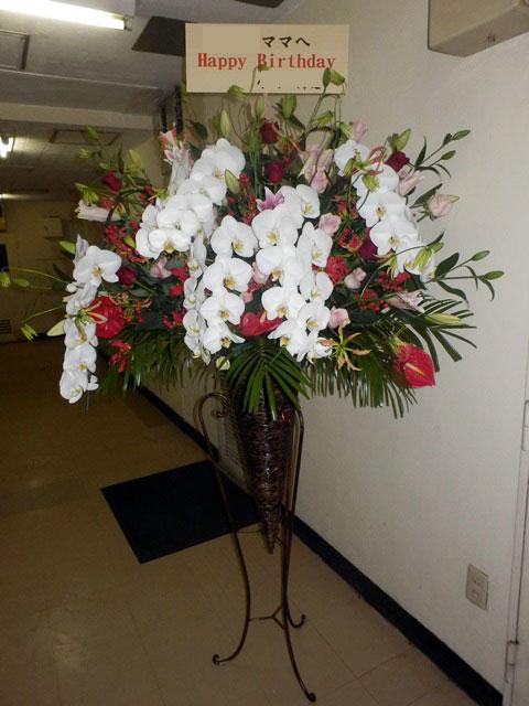 胡蝶蘭御祝い花