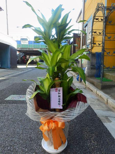 ビジネス 観葉植物