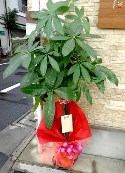 オフィス向けの観葉植物