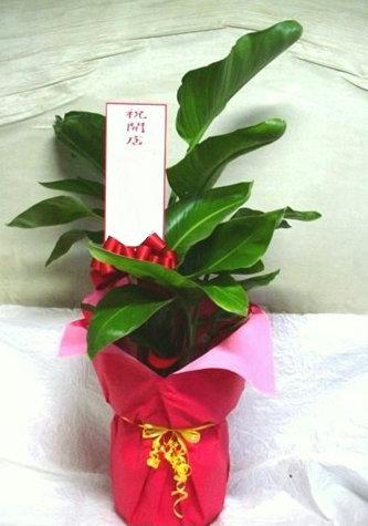 会社に観葉植物をプレゼント