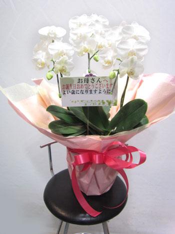 開業祝いの花鉢