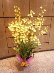 お祝い 花鉢