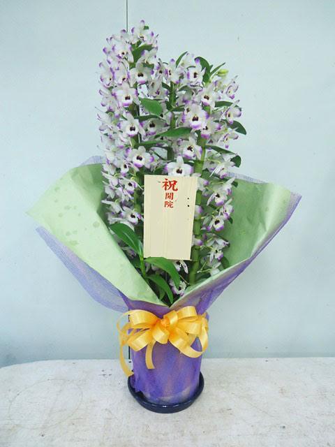 お祝い 開院 花鉢