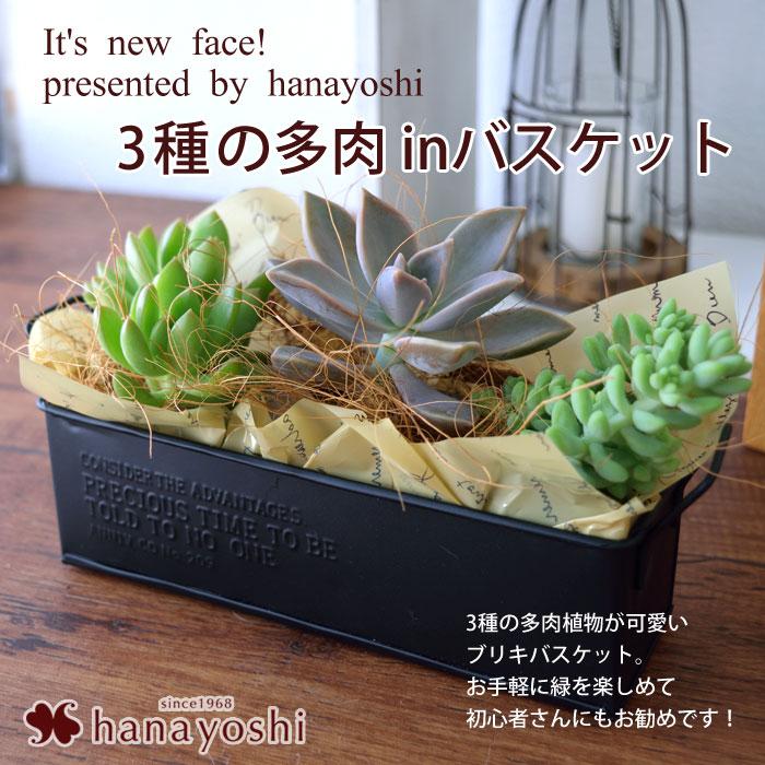 創作盆栽~苔あそび~選べる盆栽と感謝の和菓子巾着のスイーツセット