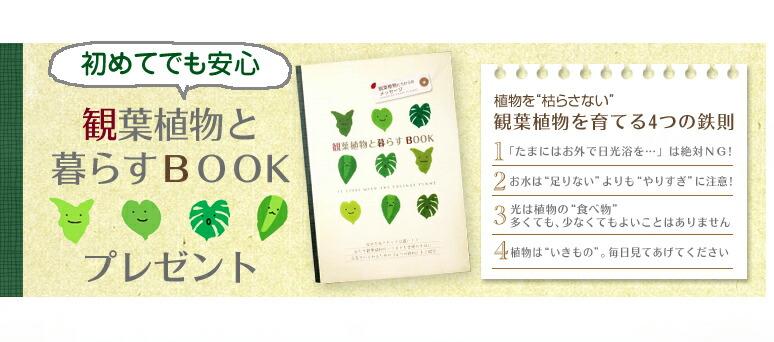 初心者さんでも安心の観葉植物ガイドをプレゼント
