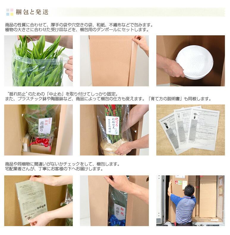プロの手で丁寧に梱包し発送します。発送はヤマト佐川西濃ゆうパックなどの宅配業者を使用