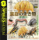 Marine Hall capsules Q Museum backyard creatures - soil biology encyclopedia - ☆ all 5 species that set ★