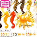 Odd Tan Club NATURE TECHNI-COLOUR MONO seahorse magnet x 16 type strap set