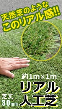リアル人工芝 芝生