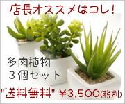 光の楽園 人気ナンバー1 多肉植物3個セット 人工観葉植物 光触媒 造花