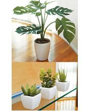 モンステラ 多肉植物 ギフト 造花 人工観葉植物 光触媒 光の楽園