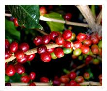 ヒロコーヒー自家焙煎コーヒーゼリーポイント1