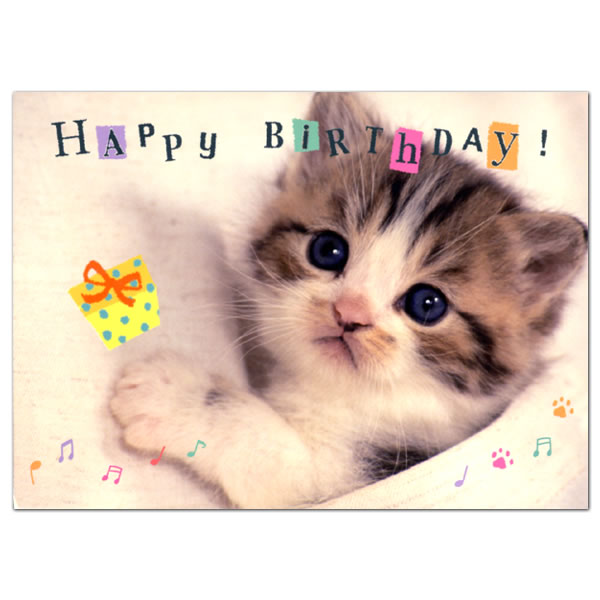 Cat Birthday Cards gangcraftnet – Cat Birthday Greetings