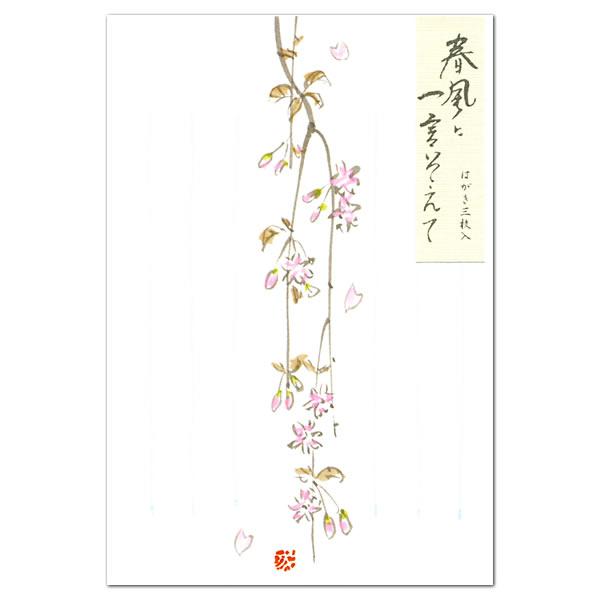 与短花明信片春天樱桃开花 24 184 (a-9) 的表达