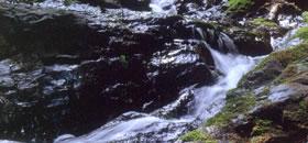 「神泉水」を使用し杉樽で天然釀造しました