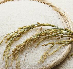 味噌原料のお米