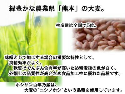 熊本県産麦 百年乃蔵2