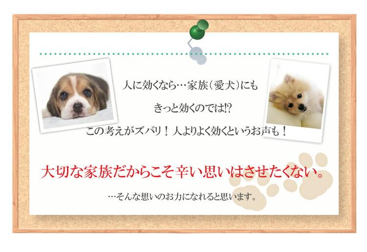 犬用(ペット)サプリメント免疫力高めるソフィのグルカンKP