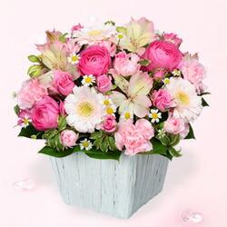 春のピンクアレンジメント511698|ホワイトデー