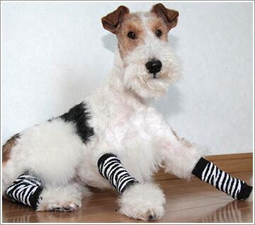 pet socks宠物腿套动物柄