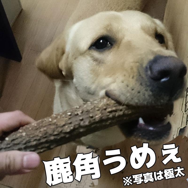 犬のおもちゃ鹿角