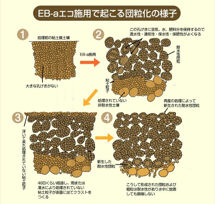 EB-aエコ施用で起こる団粒化の様子