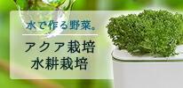 水で作る、おいしい野菜。アクア栽培キット