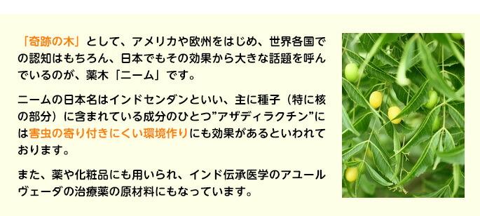 """「奇跡の木」として、アメリカや欧州をはじめ、世界各国での認知はもちろん、日本でもその効果から大きな話題を呼んでいるのが、薬木「ニーム」です。ニームの日本名はインドセンダンといい、主に種子(特に核の部分)に含まれている成分のひとつ""""アザディラクチン""""には害虫の寄り付きにくい環境作りにも効果があるといわれております。また、薬や化粧品にも用いられ、インド伝承医学のアユールヴェーダの治療薬の原材料にもなっています。"""