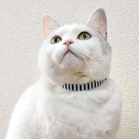 【猫】【首輪】MIX3.8kgのえのきちゃんはグリーン系を着用