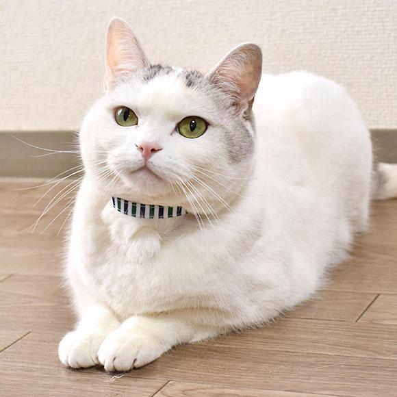 【猫】【首輪】オシャレなトリコロールボーダー柄のカラー