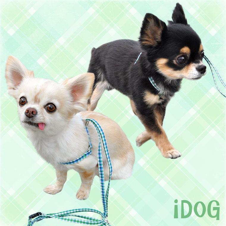 【犬 首輪】 ワンタッチハーネス おすましチェック 【国産 布製】:犬の服のiDog