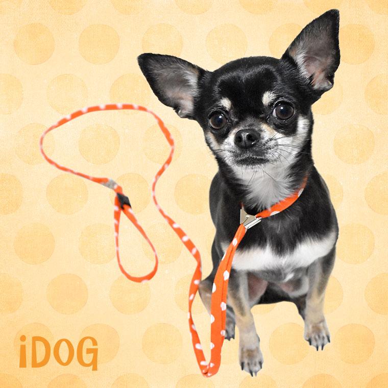【犬 首輪】 ワンタッチリード 大きな水玉 【国産 布製】:犬の服のiDog