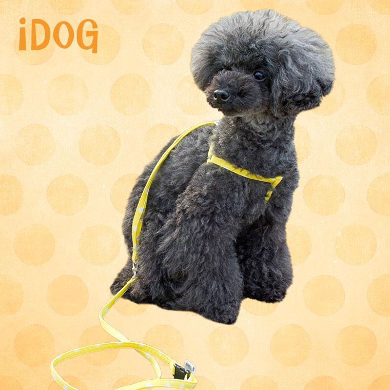 【犬 ハーネス】 iDog アイドッグ ワンタッチハーネス 大きな水玉 【国産 布製】:犬の服のiDog