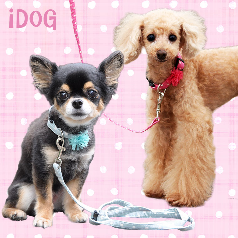 【犬 首輪】 iDog アイドッグ リード・カラーセット ドットガーゼ×フラワー 【国産 布製】:犬の服のiDog