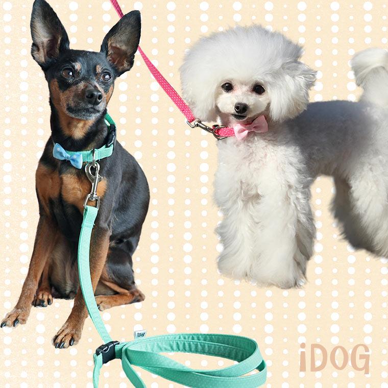 【犬 首輪】 iDog リード・カラーセット ピンドット×水玉リボン 【国産 布製】犬の服のiDog