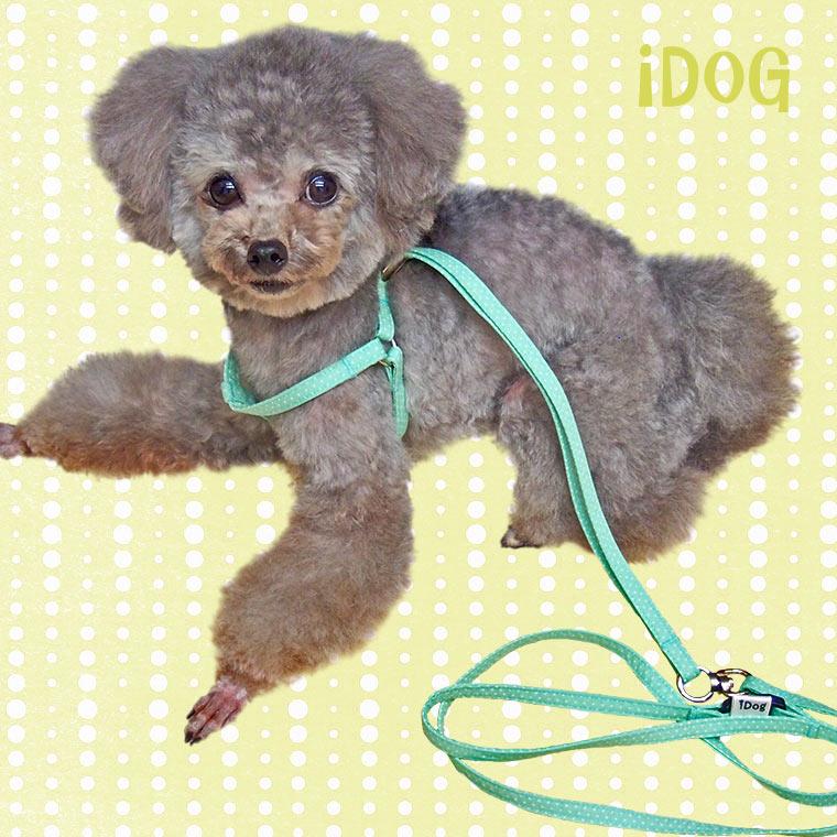 【犬 ハーネス】 iDog アイドッグ ワンタッチハーネス ピンドット 【国産 布製】:犬の服のiDog