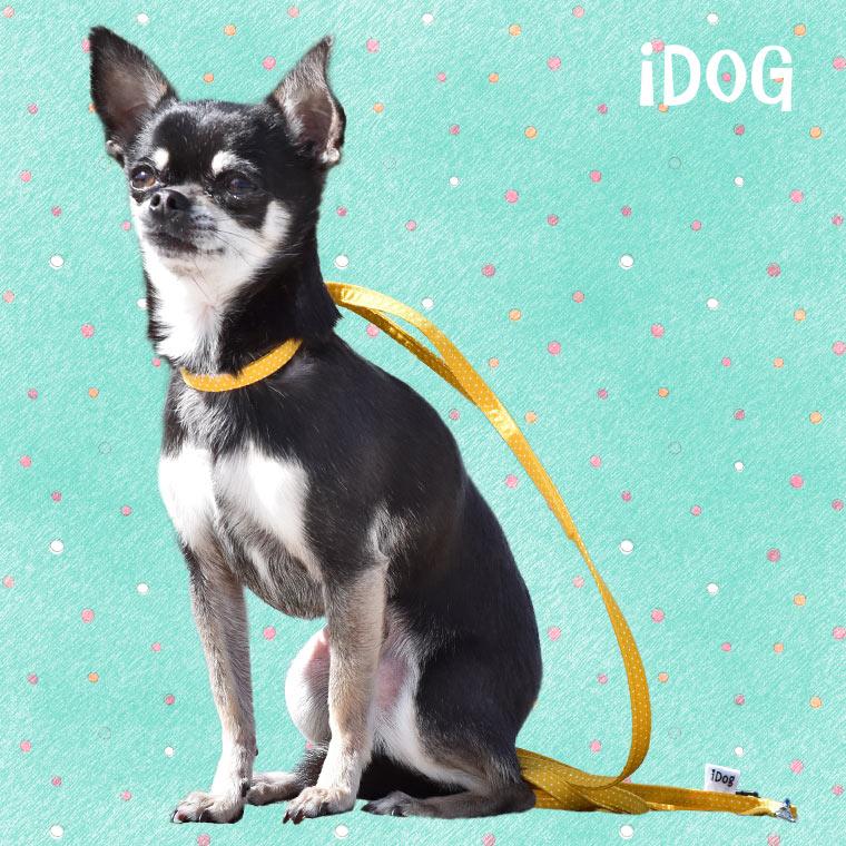 【犬 首輪】 iDog アイドッグ ワンタッチリード ピンドット 【国産 布製】:犬の服のiDog